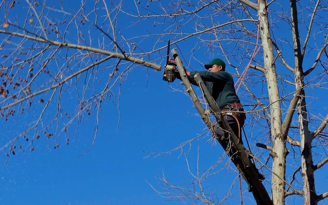 Expert Tree Pruning with Elevated Tree Service