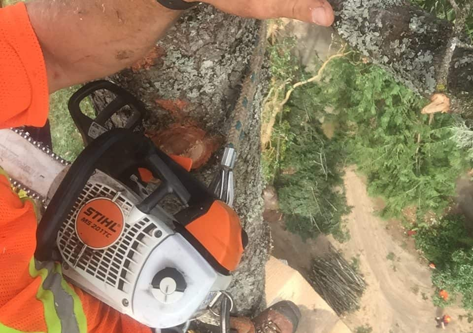 Friendly Tree Removal Services in Victoria BC