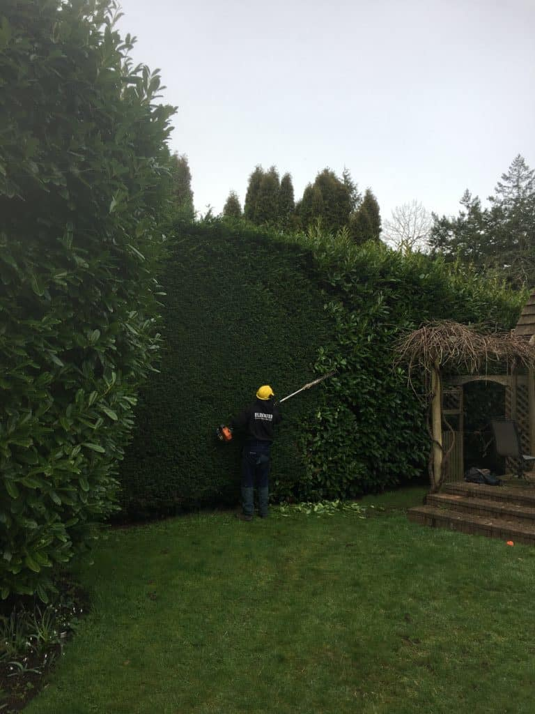 Hedge Trimming by Elevated Tree Service