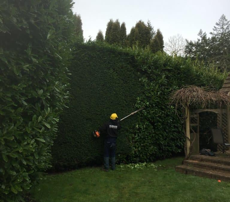 Friendly Hedge Trimming Services in Victoria BC