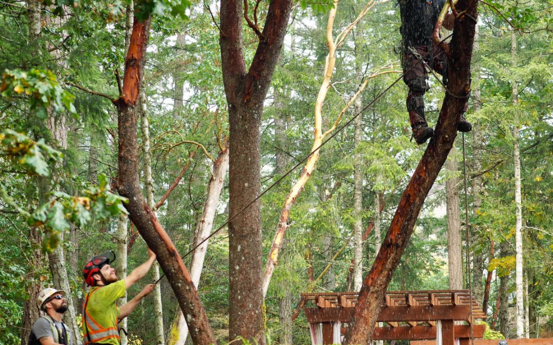Expert Tree Pruning by Elevated Tree Service